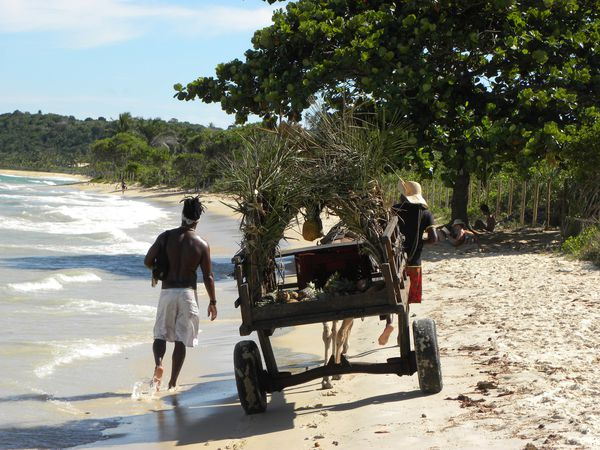 Bresil Bahia Troncoso Plage Cocotiers 3