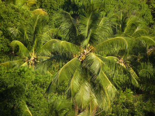 Bresil Bahia Cocotiers 12