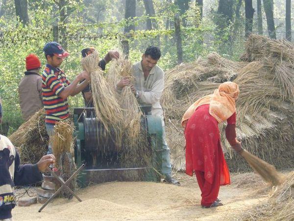 NEPAL 035