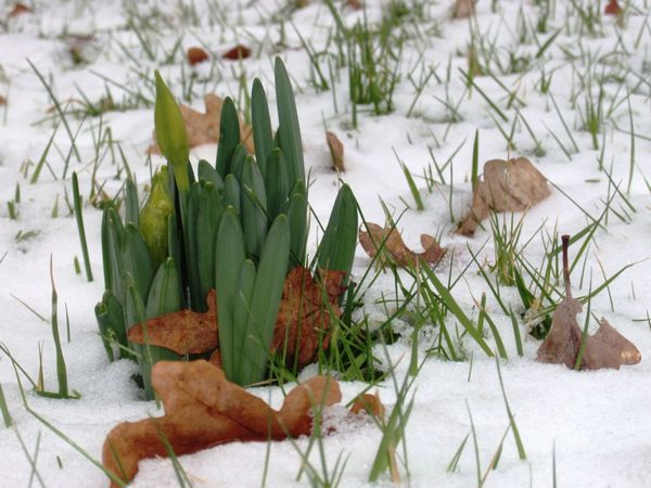 2010-02-14-Carroir008-small.JPG