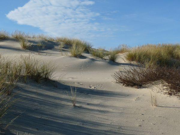 Biscarosse-plage le 18 janvier 2010 021