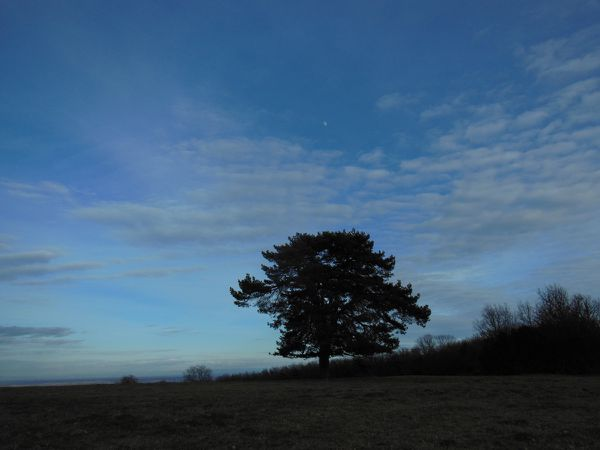 Balade du 9 février 2014 - L'arbre seul - photo 02