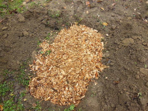 Jardinage chez Dut - 8 novembre 2014 - Photo 04