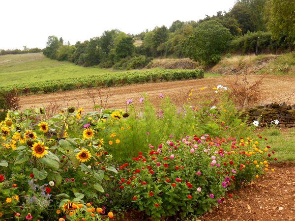 Balade du 14 septembre 2013 - St Clair - jardin - les fleur