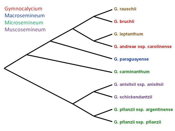 Cladogramme 1