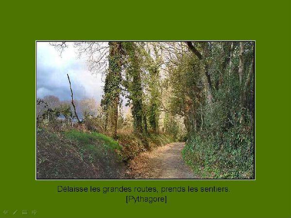 Sentier sous bois. jpeg