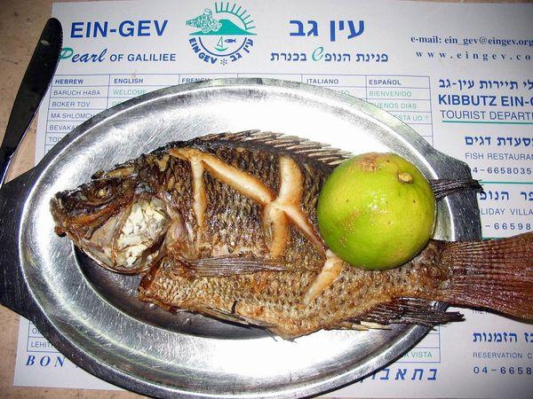 03 8 Israël novembre 2005