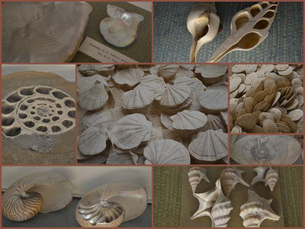 montage-musee-paleonthologie-3.jpg