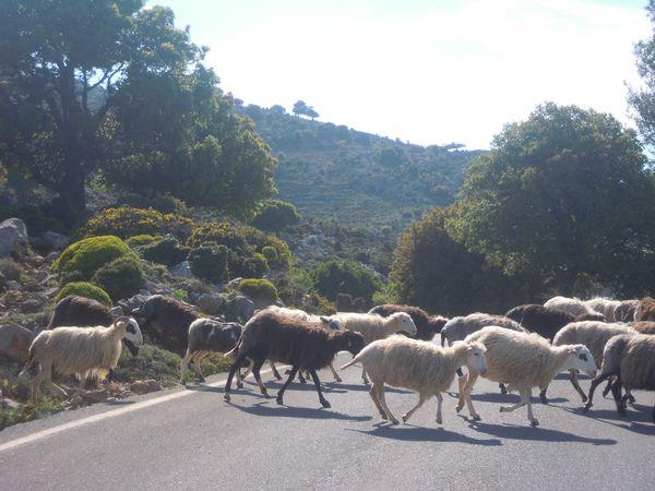 Crete-2011-143.JPG