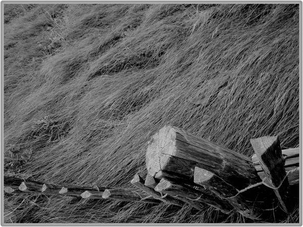 La-mauvaise-herbe.jpg