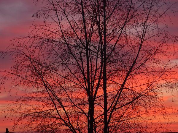 Lever-de-soleil-17-3-2012.jpg