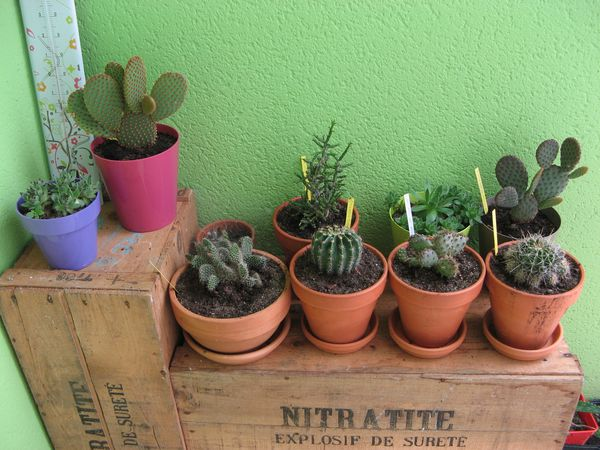 cactus-collection.jpg