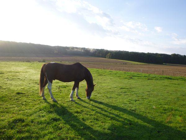 cheval-automne.JPG