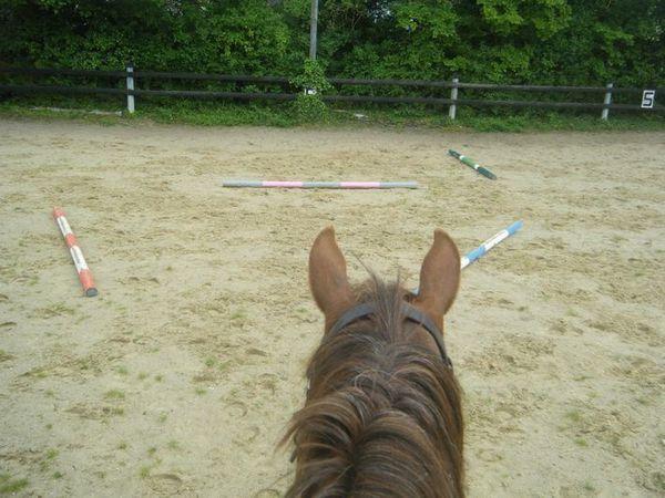 travail-cheval.JPG