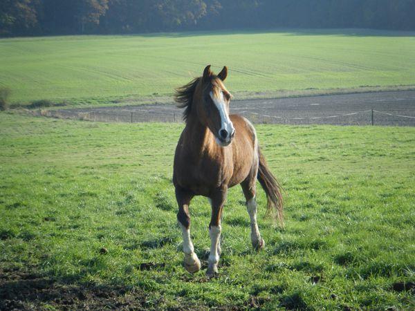 alimentation cheval pré hiver