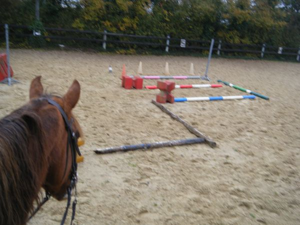 travail cheval exercices