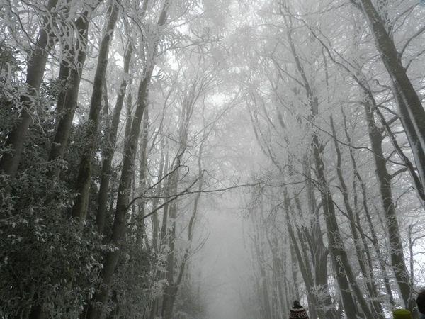 20120129-Fonbruno-014.jpg
