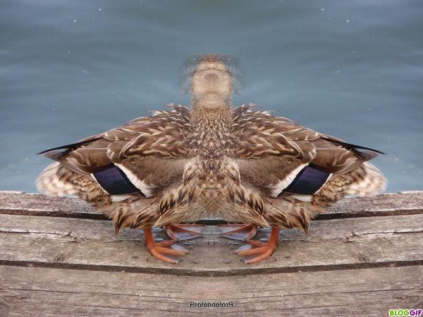 coin-coin-delire-photofarfouille (12)