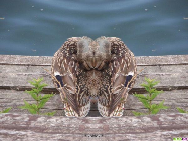 coin-coin-delire-photofarfouille (4)