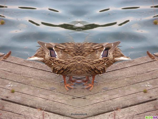 coin-coin-delire-photofarfouille (9)