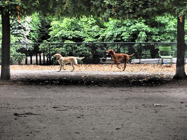 aux-tuileries-9-juillet-2012.JPG
