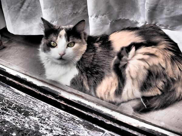 le-chat-9-juillet-2012.JPG