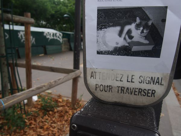 le-chat--1er-aout-2O12.JPG