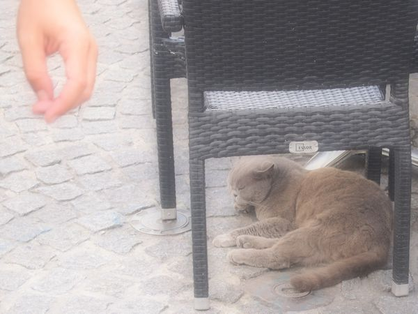 Le-chat-d-Angouleme-26-aout-2012.JPG