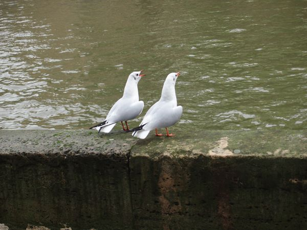 Vos-gueules-les-mouettes--17-oct-2012.JPG