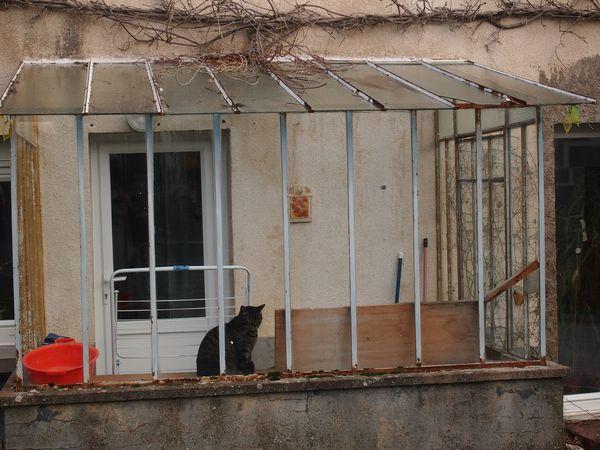 Le-chat-de-Villers-10.JPG