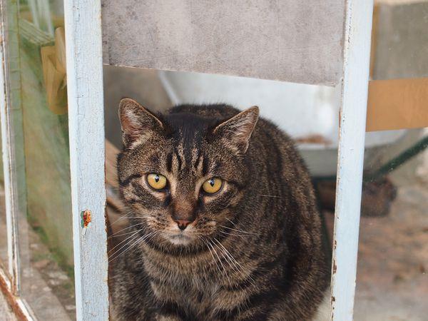 Le-chat-de-Villers-14.JPG