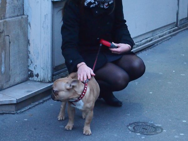 le-chien-bd-st-michel-16-dec-2012.JPG