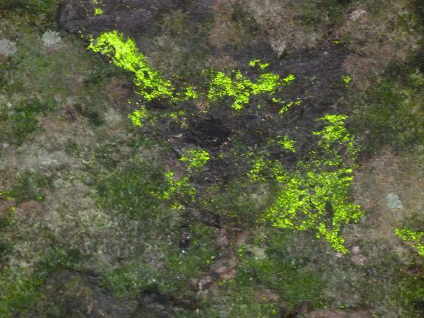 Mont d'Arrée juillet 2012 (27)