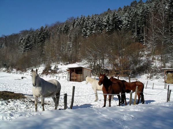 C02 - chevaux [1600x1200]