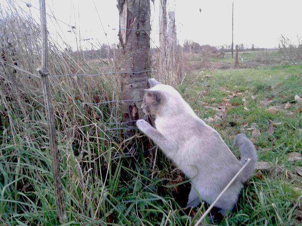 Happy chasse