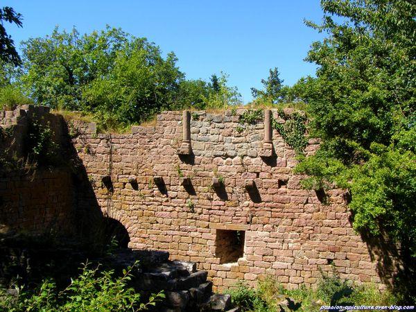 Château du Wahlenbourg (2)