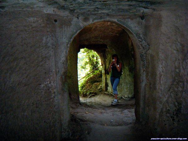 Ruine du vieux Windstein (9)