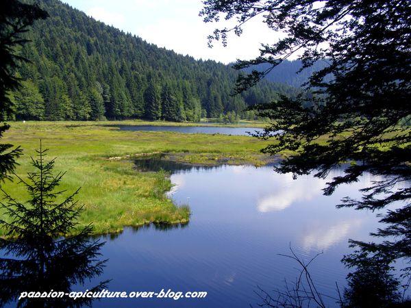 Lac de Lispach (13)