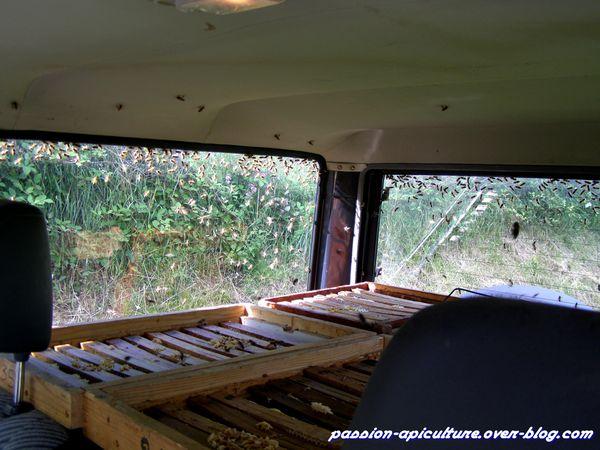 La récolte du miel de châtaignier (3)