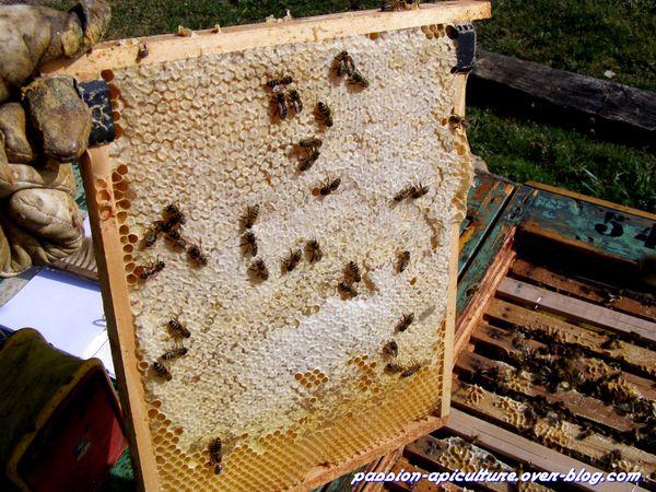 Visite ruche 12 mars 2012 (6)