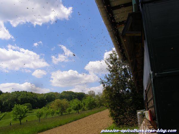Vols des abeilles