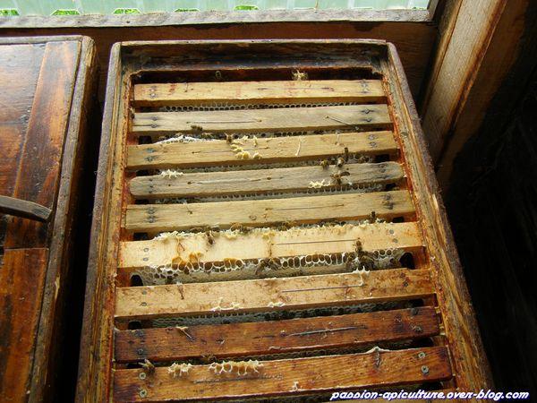 Miel d'acacia (3)