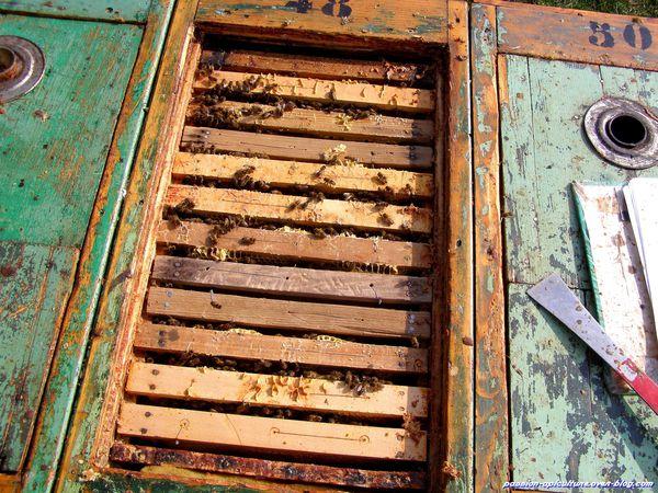 Premère visite des ruches 2014 (5)
