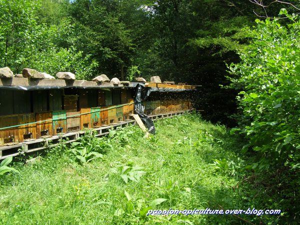 Ruches et abeilles (4)