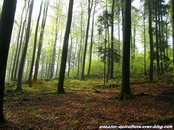 Forêt (10)