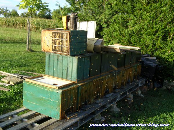Chasse abeilles (1)