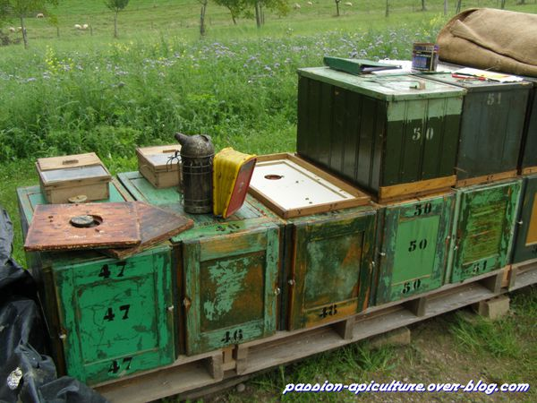 Chasse abeilles (2)