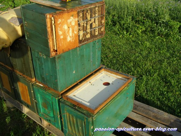 Chasse abeilles
