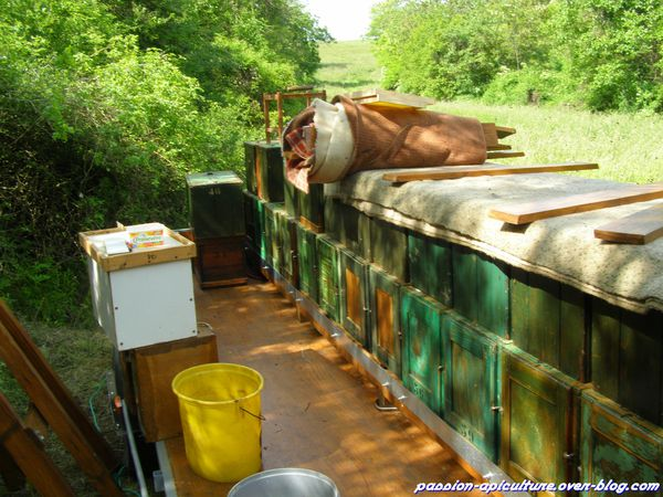 Transhumance dans les acacias 2013 (3)