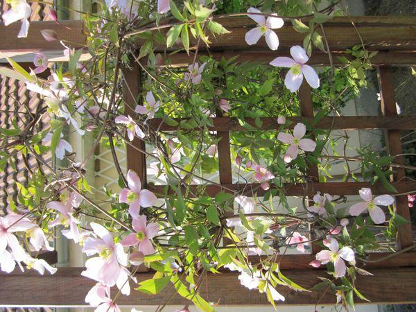 notre-jardin 0679-copie-1